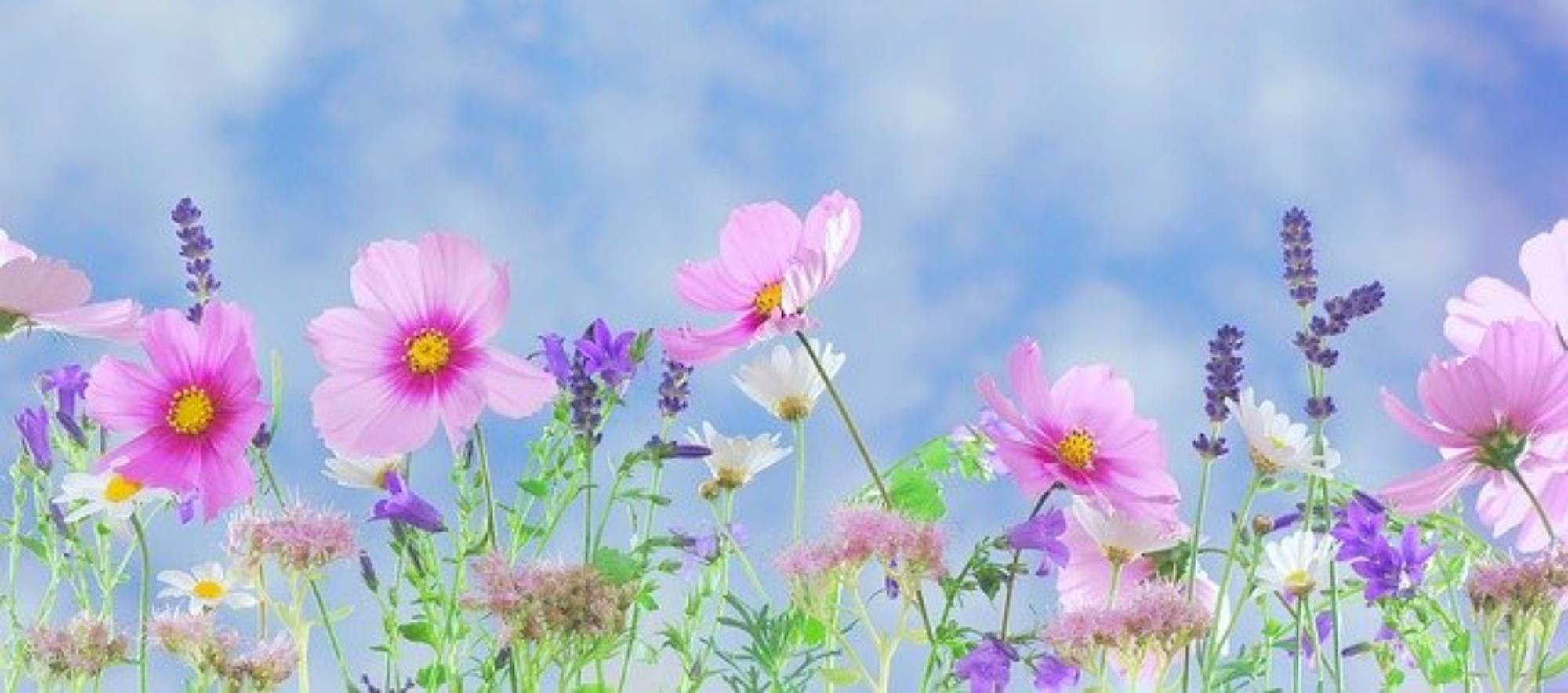 rośliny wiosenne