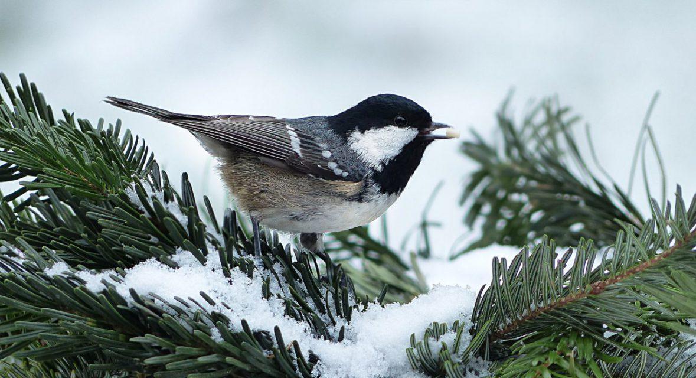 Okrywanie roślin na zimę – jak zrobić to dobrze?